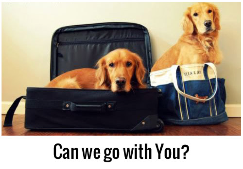 dog in suitcases