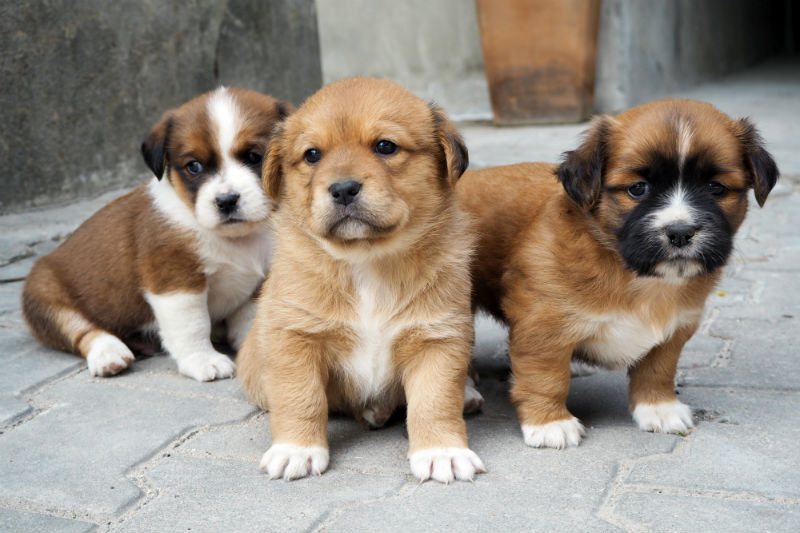 House Tips For Dealign With Puppies