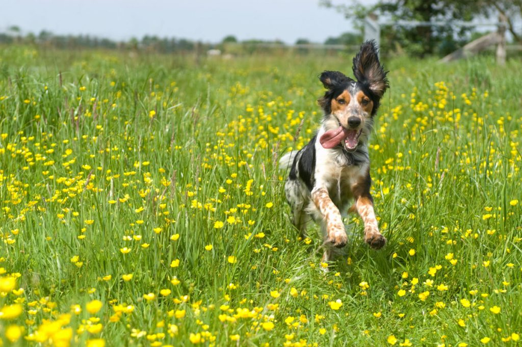 Dog playing in the field
