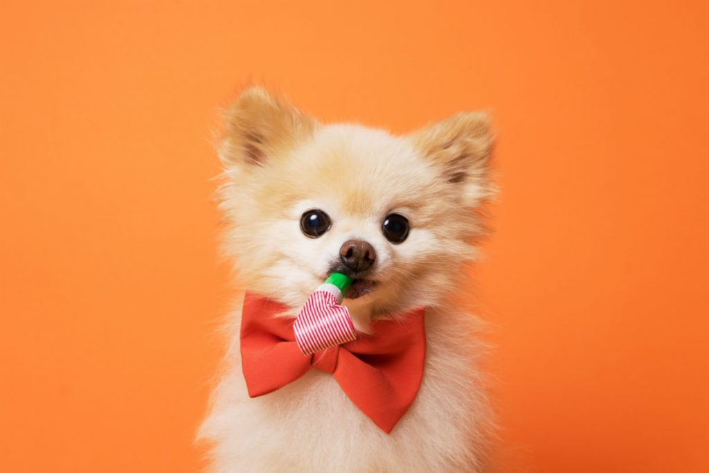 dog dressed for a party