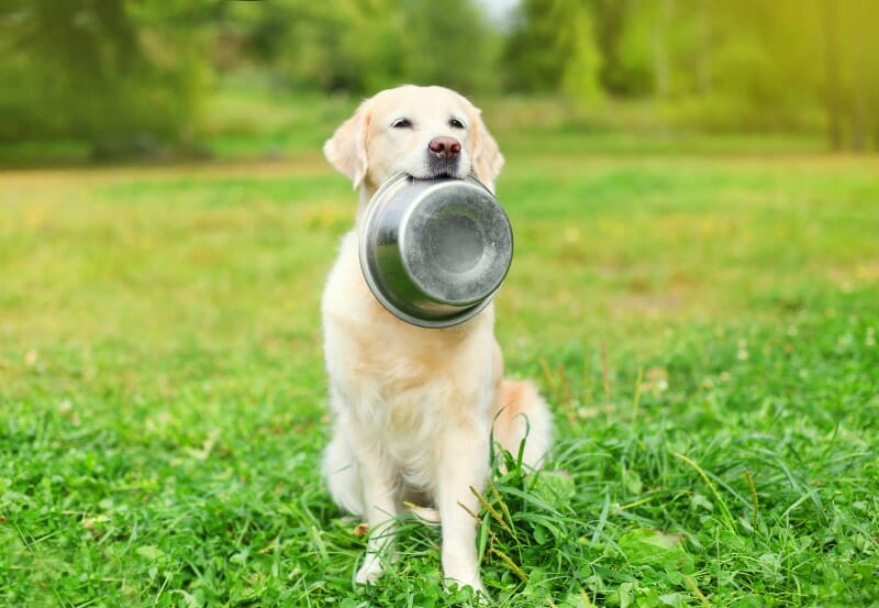Dog holding a food bowl in its mouth